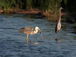 gornje-podunavlje-special-nature-reserve-fauna